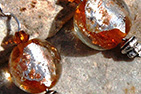 Amber Silver Leaf Murano Glass Ball and Rock Quartz Sterling Silver Earrings